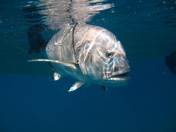 GT underwater shot