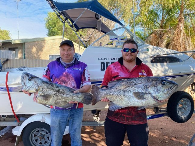 A couple of nice Dhufish