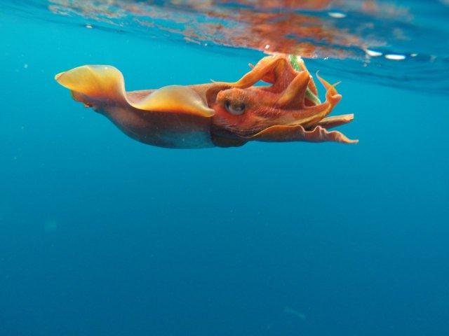 POTM - Cuttlefish on Plackie