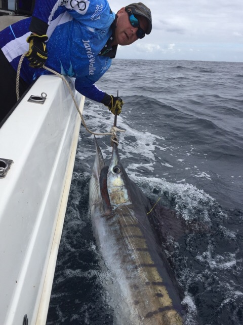 Striped marlin