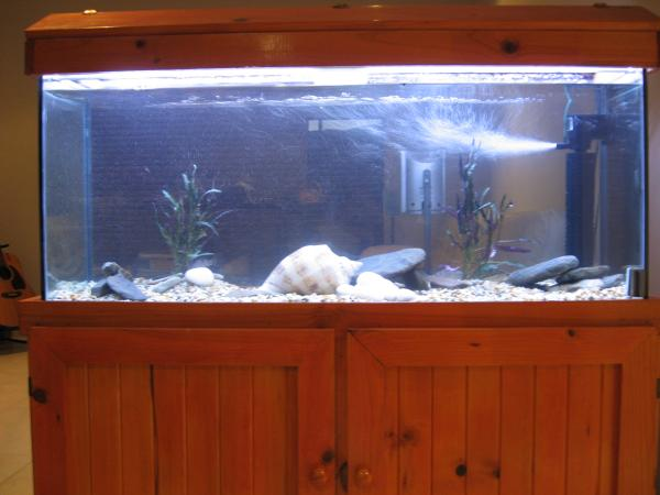 My new second-hand fish tank