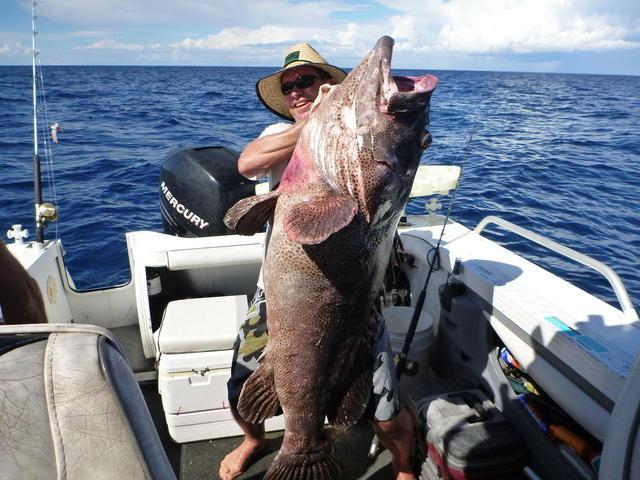Serious Malabar Cod?
