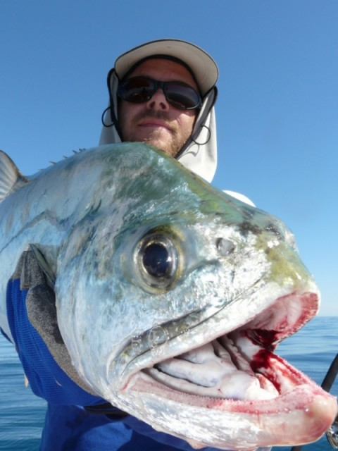 Big Queenfish off Peak Island in Exmouth