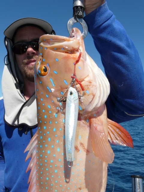 Jamie's Jigged Coral Trout