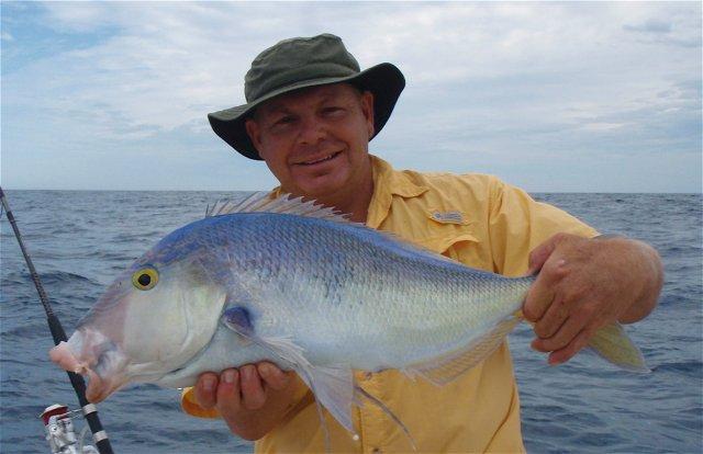 Queenfish