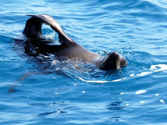 Ocean Pilates / Yoga