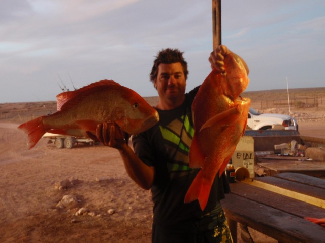 Couple more Gnaraloo Reds