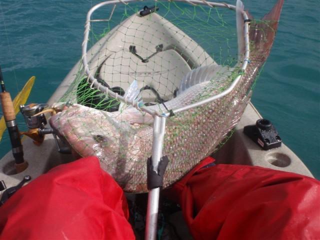 1st Decent Kayak Snapper