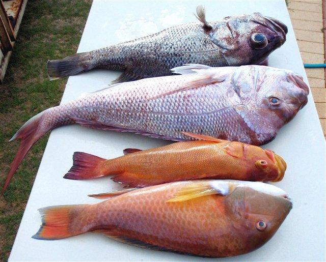 Yesterday's fishing