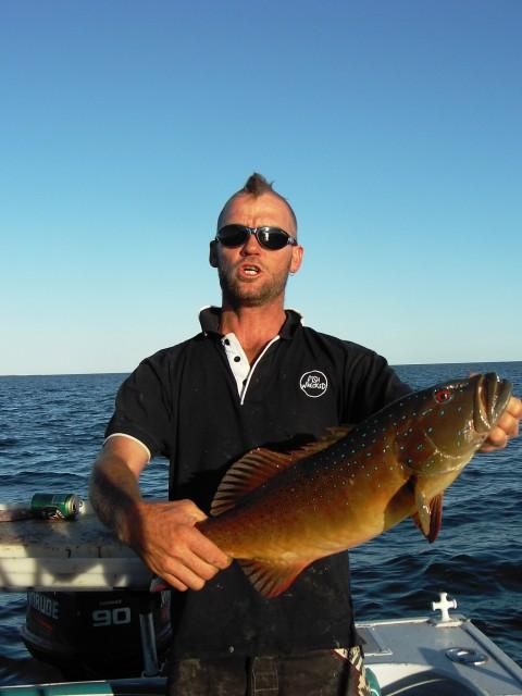 trout hawk