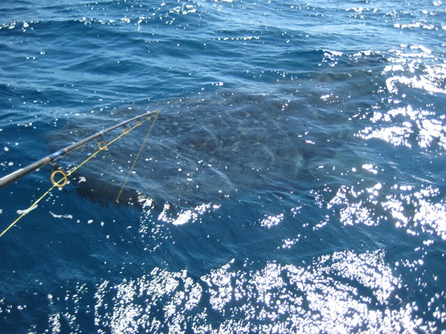 the day i hooked a WHALE