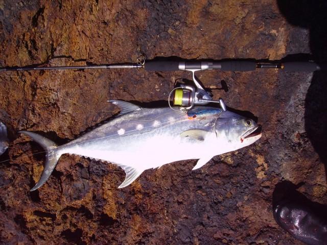 First Pilbara Fish
