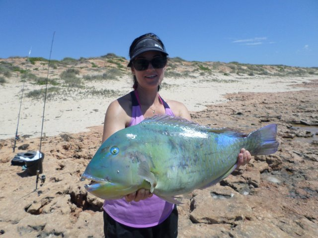 Pic of the Month Exmouth Bluebone