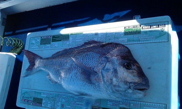 Quick Bunbury Fish