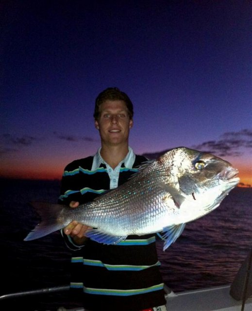 Last nights Snapper