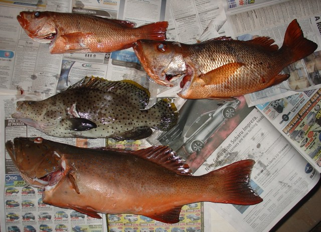Today's Catch 19-5-08