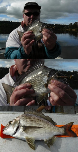 20080726 - Bream Fishing 7