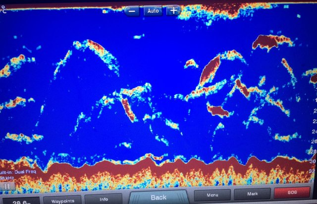 Multiple Whale Sounder Shot