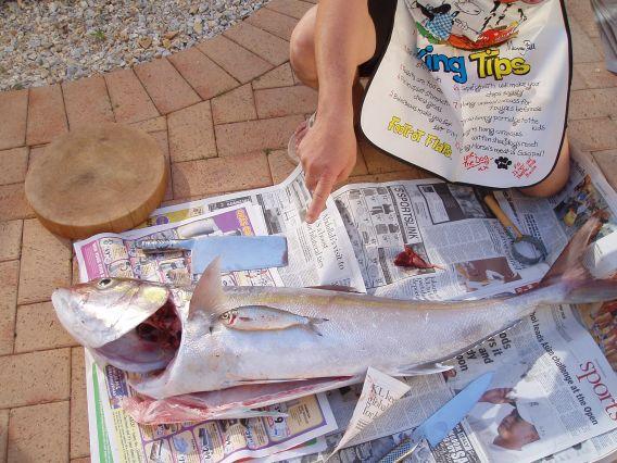 aj and herring