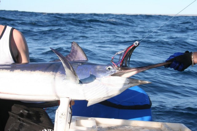 My Black Marlin on a Richter Lure