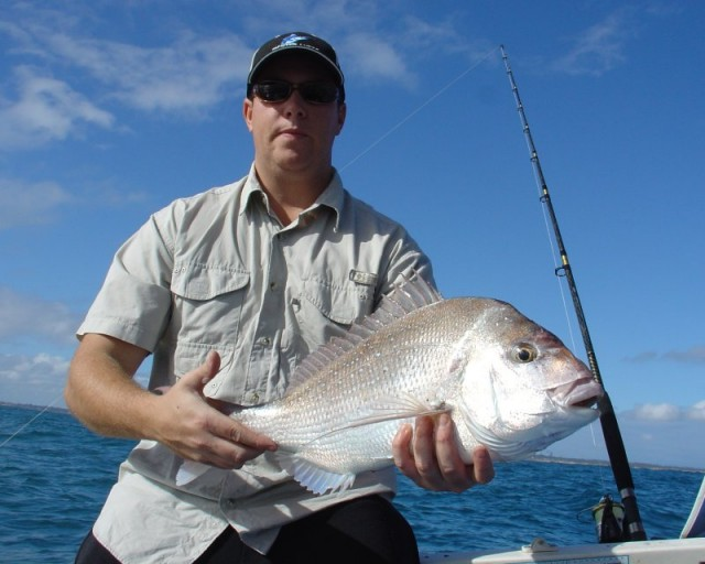 Bolts Pink Snapper