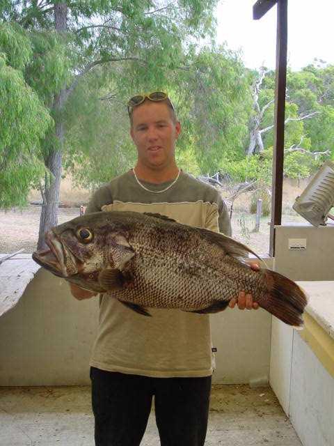 Walpole Dhufish
