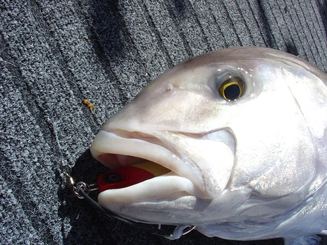 Shizz's Samsonfish Jig Swallower