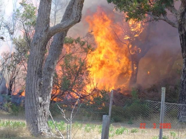 Cobweb Fire