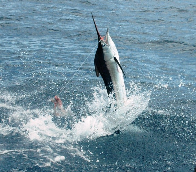 Gabriel - Richter Lure Competition Entry - Exmouth Black Marlin - 2