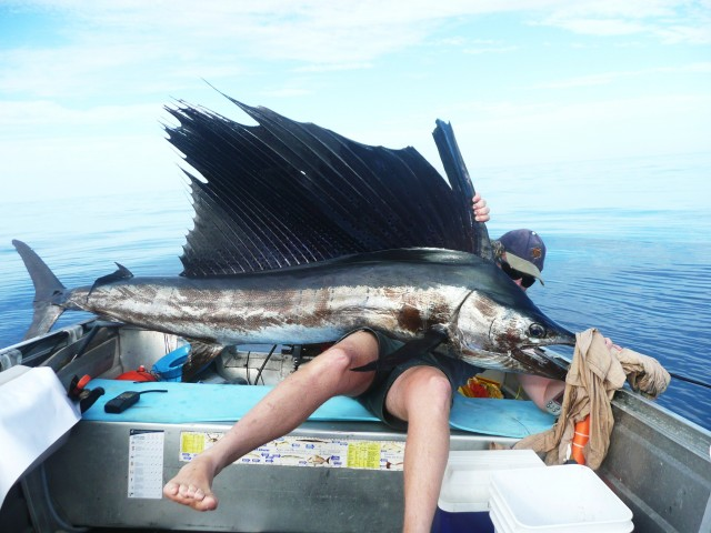 first sailfish in the tinny