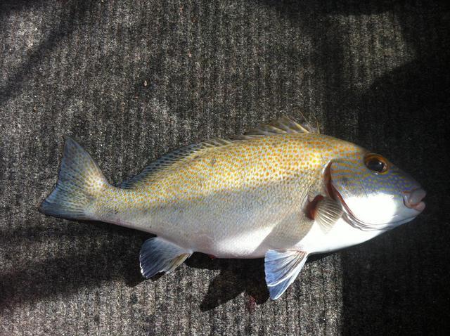 Fish eye dee req.