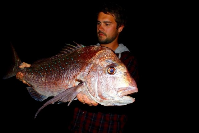 First fish for the landbased snapper season