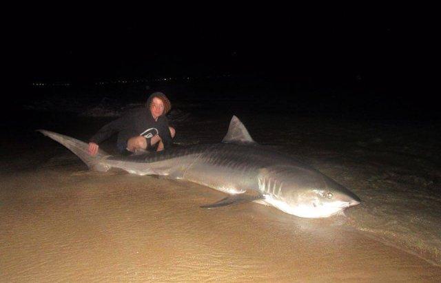Nice shark