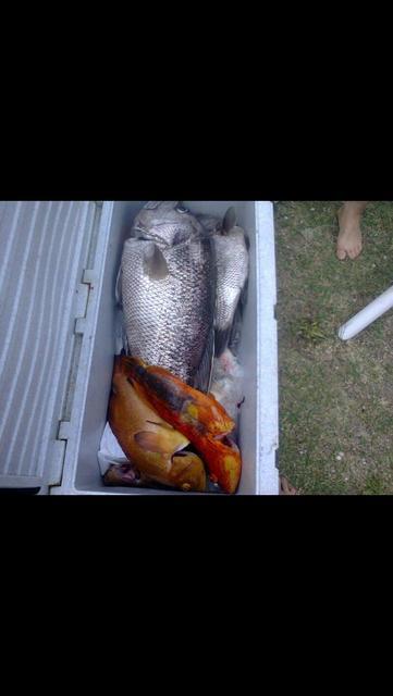 Cape nat fishing