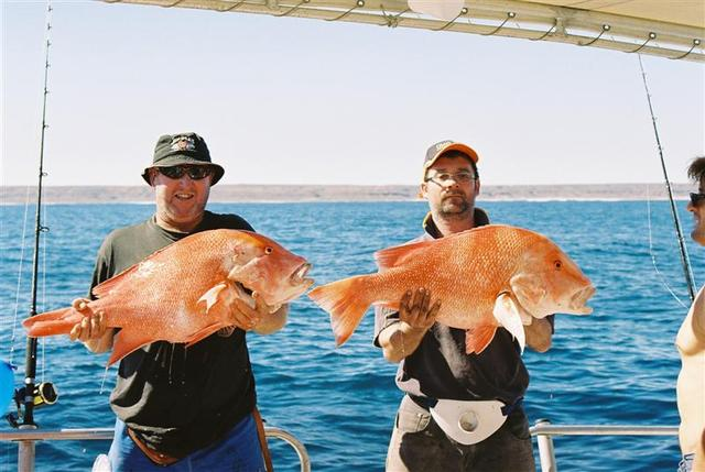 Couple of Big Reds