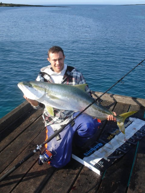 how to catch yellowtail kingfish