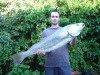 Mulloway at Home