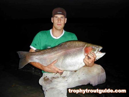 43 pound rainbow trout