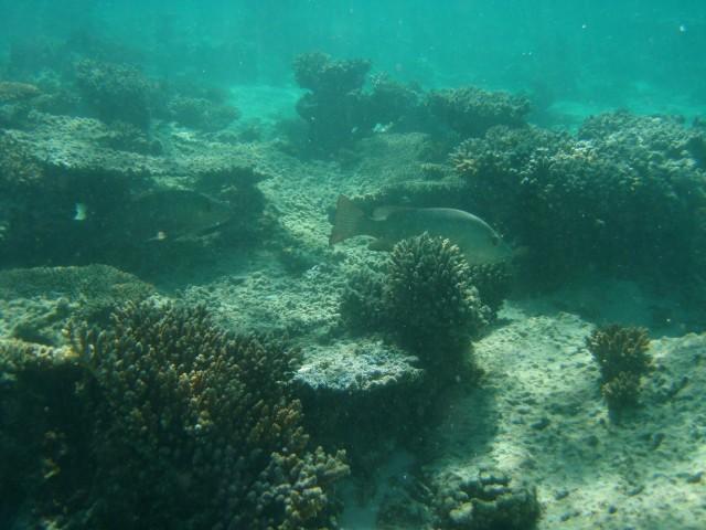Underwater Jack