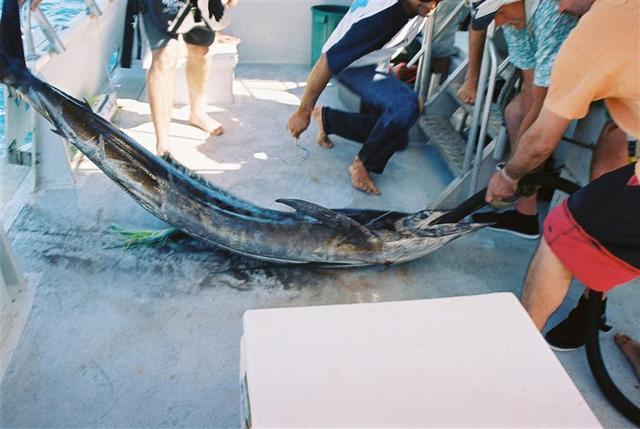 Sailfish 4