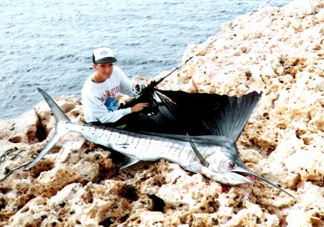 Sailfish off the cliffs