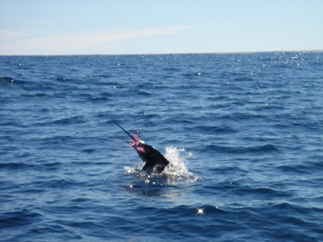 Sailfish on Richter Skirt