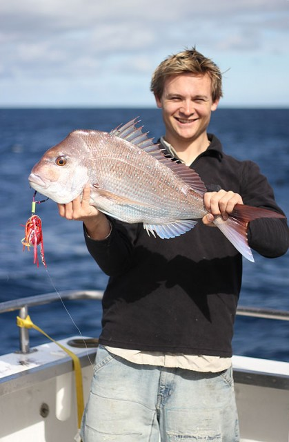 Snapper on octa