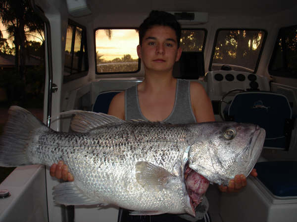Another solid dhuie