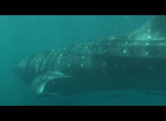 Exmouth Submarine