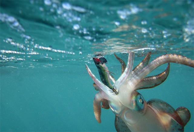 Underwater squid