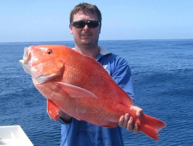 Matt's Red