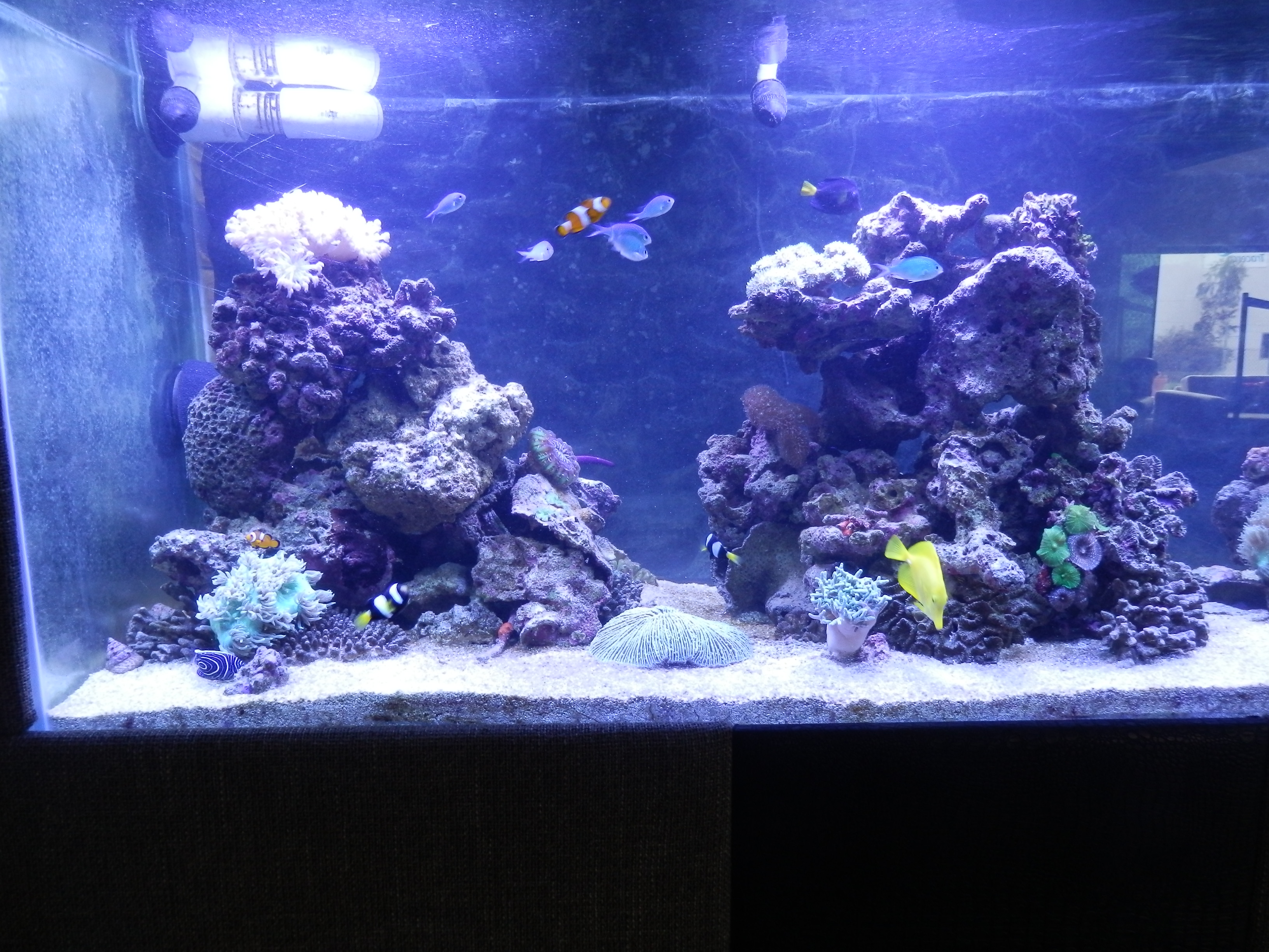 New fish tank fishing fishing wa for New fish tank