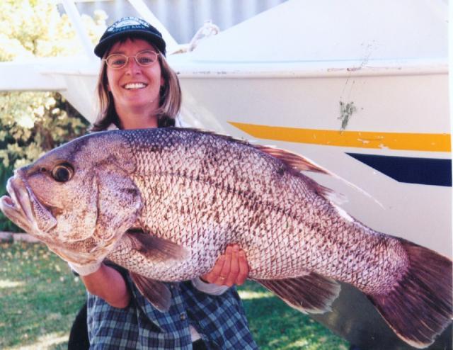 New Blog 1 Dhufish